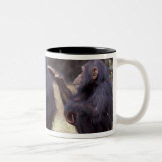 Africa, Tanzania, Gombe NP Infant female Two-Tone Coffee Mug
