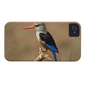 Africa, Tanzania, Grey-headed Kingfisher Case-Mate iPhone 4 Case
