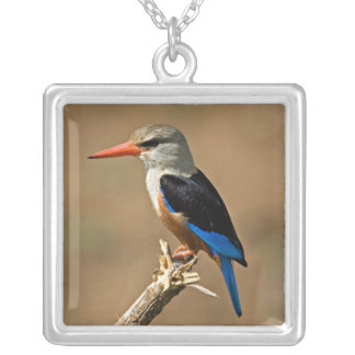 Africa, Tanzania, Grey-headed Kingfisher Square Pendant Necklace