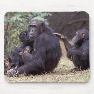 África, Tanzania, hembra infantil de Gombe NP Alfombrillas De Ratones