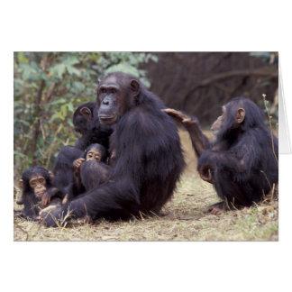 África, Tanzania, hembra infantil de Gombe NP Tarjeta De Felicitación