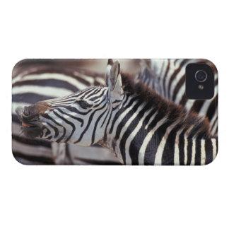 Africa,Tanzania,herd of zebras iPhone 4 Case-Mate Case