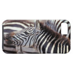 Africa,Tanzania,herd of zebras iPhone 5 Covers