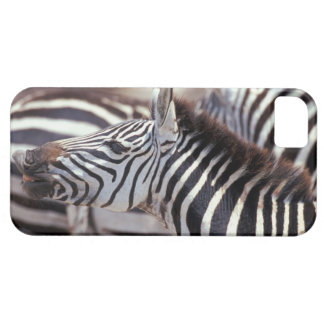 Africa,Tanzania,herd of zebras iPhone SE/5/5s Case