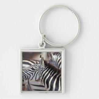 Africa,Tanzania,herd of zebras Keychain