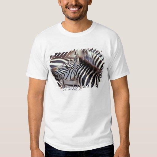 Africa,Tanzania,herd of zebras Shirts