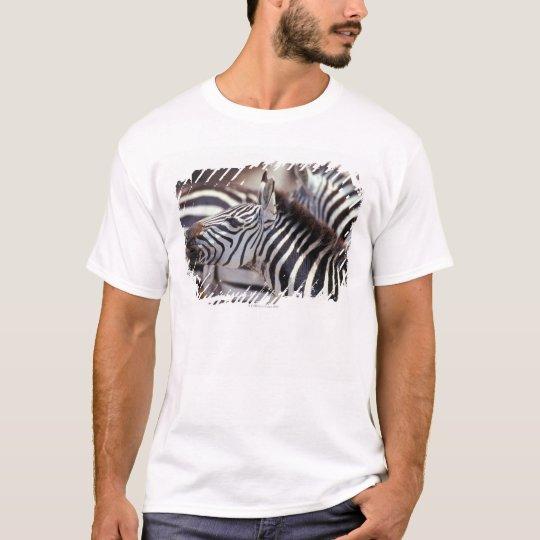 Africa,Tanzania,herd of zebras T-Shirt