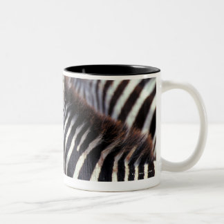 Africa,Tanzania,herd of zebras Two-Tone Coffee Mug