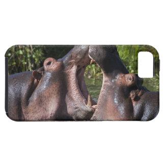 África. Tanzania. Hippopotamus sparring en iPhone 5 Funda