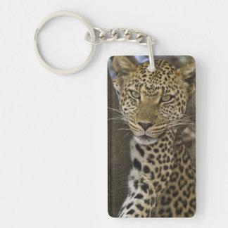 Africa. Tanzania. Leopard in tree at Serengeti Keychain