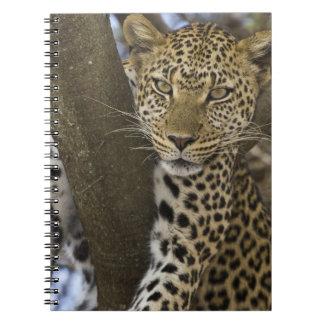 África. Tanzania. Leopardo en árbol en Serengeti Note Book