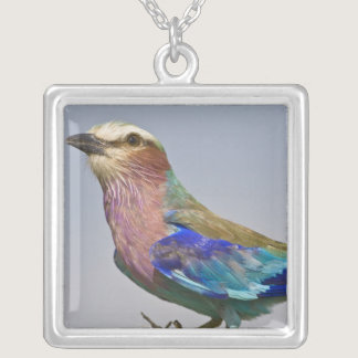Africa. Tanzania. Lilac-Breasted Roller in Silver Plated Necklace