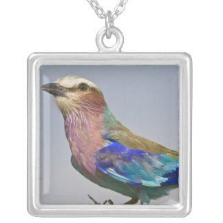 Africa. Tanzania. Lilac-Breasted Roller in Square Pendant Necklace
