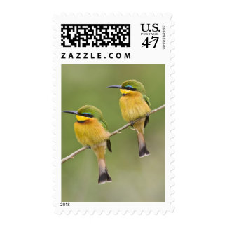 Africa. Tanzania. Little Bee Eaters at Manyara Postage