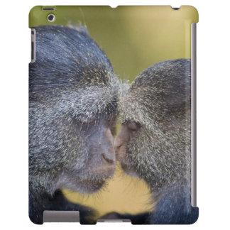 África. Tanzania. Madre azul del mono con los jóve Funda Para iPad