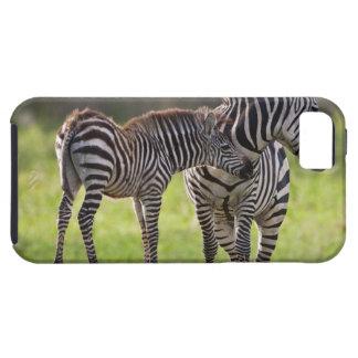 África. Tanzania. Madre y bebé de la cebra común iPhone 5 Carcasa
