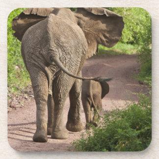 África. Tanzania. Madre y becerro del elefante en Posavasos De Bebidas