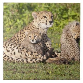África. Tanzania. Madre y cachorros 2 del guepardo Azulejo Cuadrado Grande