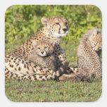 África. Tanzania. Madre y cachorros 2 del guepardo Colcomania Cuadrada