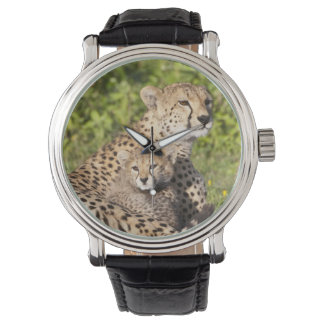 África. Tanzania. Madre y cachorros 2 del guepardo Relojes De Pulsera