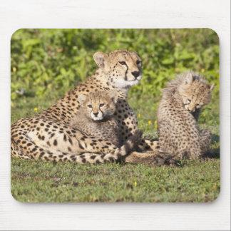 África. Tanzania. Madre y cachorros 2 del guepardo Tapetes De Raton