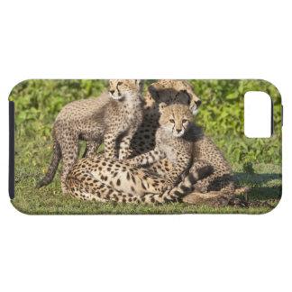 África. Tanzania. Madre y cachorros del guepardo Funda Para iPhone 5 Tough