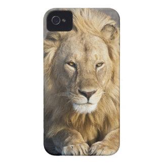 Africa. Tanzania. Male Lion at Ndutu in the Case-Mate iPhone 4 Case