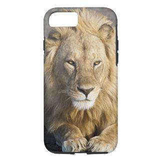 Africa. Tanzania. Male Lion at Ndutu in the iPhone 8/7 Case
