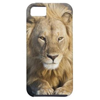 Africa. Tanzania. Male Lion at Ndutu in the iPhone SE/5/5s Case