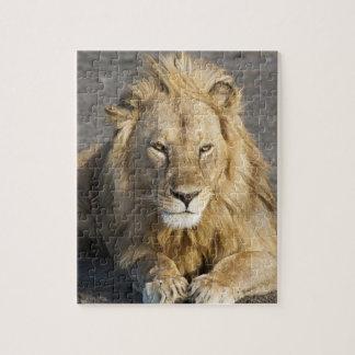 Africa. Tanzania. Male Lion at Ndutu in the Puzzles