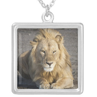 Africa. Tanzania. Male Lion at Ndutu in the Square Pendant Necklace