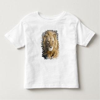 Africa. Tanzania. Male Lion at Ndutu in the Toddler T-shirt