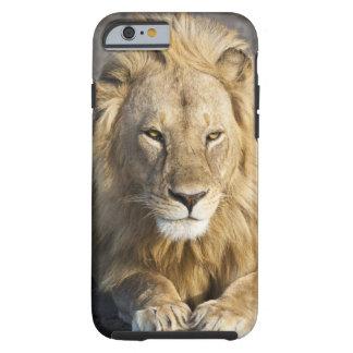 Africa. Tanzania. Male Lion at Ndutu in the Tough iPhone 6 Case