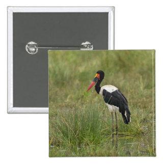 Africa. Tanzania. Male Saddle-billed Stork at Button