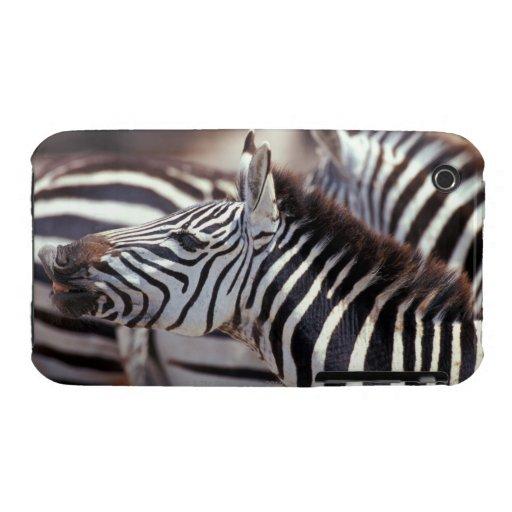 África, Tanzania, manada de cebras Case-Mate iPhone 3 Fundas
