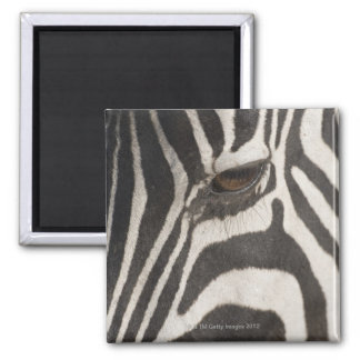 Africa, Tanzania, Ngorongoro Conservation Area 2 Inch Square Magnet
