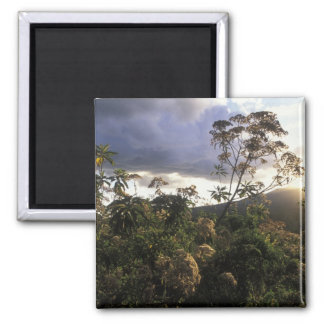 Africa, Tanzania, Ngorongoro Conservation Area, 2 Inch Square Magnet