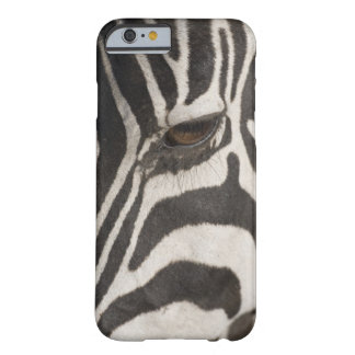 'Africa, Tanzania, Ngorongoro Conservation Area' Barely There iPhone 6 Case