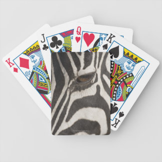Africa, Tanzania, Ngorongoro Conservation Area Bicycle Playing Cards