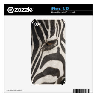 Africa, Tanzania, Ngorongoro Conservation Area Decals For The iPhone 4S