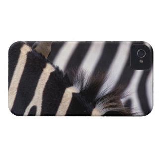 Africa, Tanzania, Ngorongoro conservation area, iPhone 4 Cover