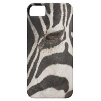 'Africa, Tanzania, Ngorongoro Conservation Area' iPhone SE/5/5s Case