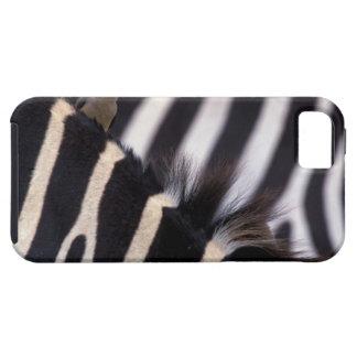 Africa, Tanzania, Ngorongoro conservation area, iPhone SE/5/5s Case