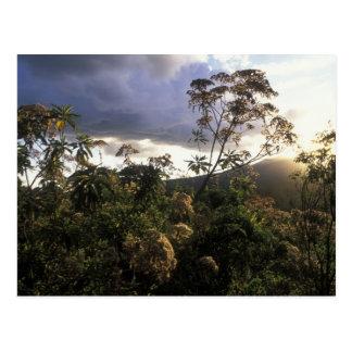 Africa, Tanzania, Ngorongoro Conservation Area, Postcard