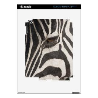 Africa, Tanzania, Ngorongoro Conservation Area Skins For iPad 3