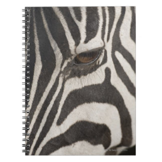 Africa, Tanzania, Ngorongoro Conservation Area Spiral Notebook