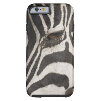 'Africa, Tanzania, Ngorongoro Conservation Area' Tough iPhone 6 Case
