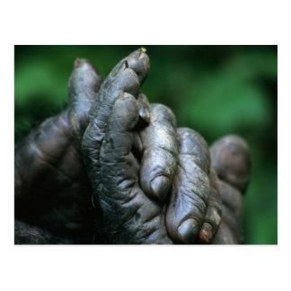 ÁFRICA Tanzania parque nacional de Gombe varón Postales