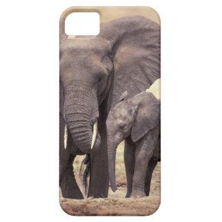 África, Tanzania, parque nacional de Tarangire. 2 iPhone 5 Coberturas
