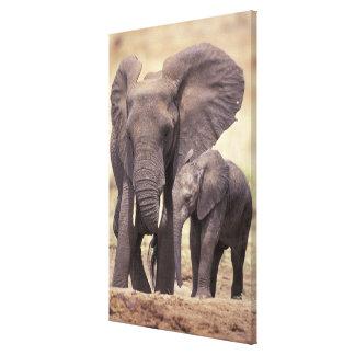 África Tanzania parque nacional de Tarangire 2 Impresión En Lona Estirada